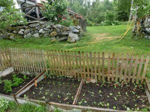 Trädgårds bilder