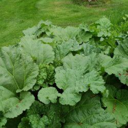 Fröer från vår trädgård